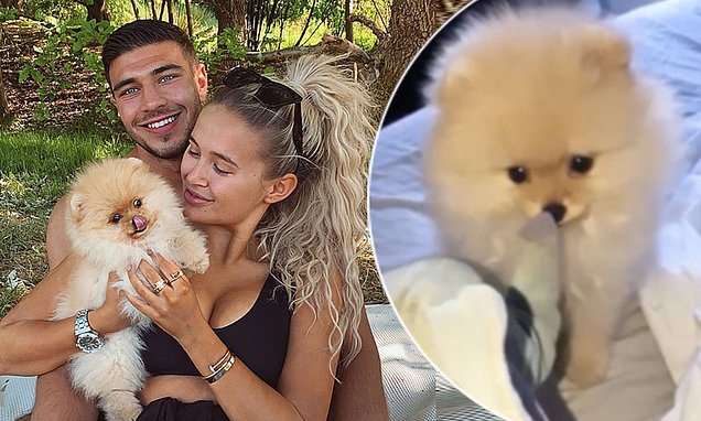 Molly-Mae Hague reveals her 21st birthday present puppy Mr Chai has passed away. - Daily Mail