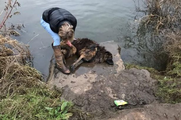 Woman's dramatic river rescue of drowning dog whose lead was tied to a rock - Mirror.co.uk