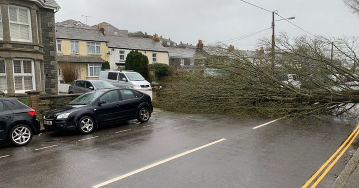Tree completely blocks Wadebridge road as Storm Dennis chaos continues - Cornwall Live