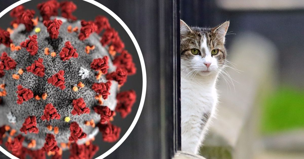 Advice issued to pet owners after cat reportedly tests positive for coronavirus - Wales Online