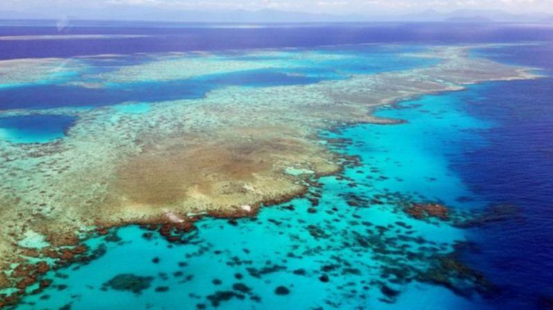 New coral bleaching on Great Barrier Reef - 7NEWS.com.au