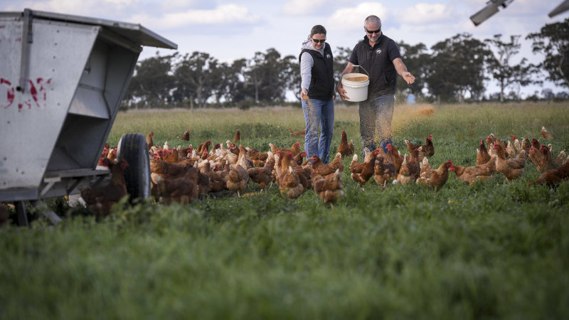 'Green and growing': Farmers buoyed by drought-breaking rains - Sydney Morning Herald