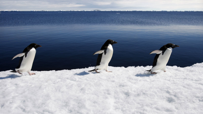'Very un-Antarctic': When the icy continent was not very cold at all - Sydney Morning Herald