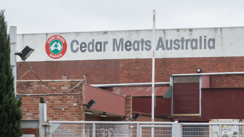Melbourne abattoir cluster grows – but is it all bad news? - Sydney Morning Herald