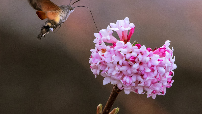 Bugged: Earth's land insects are disappearing - Sydney Morning Herald
