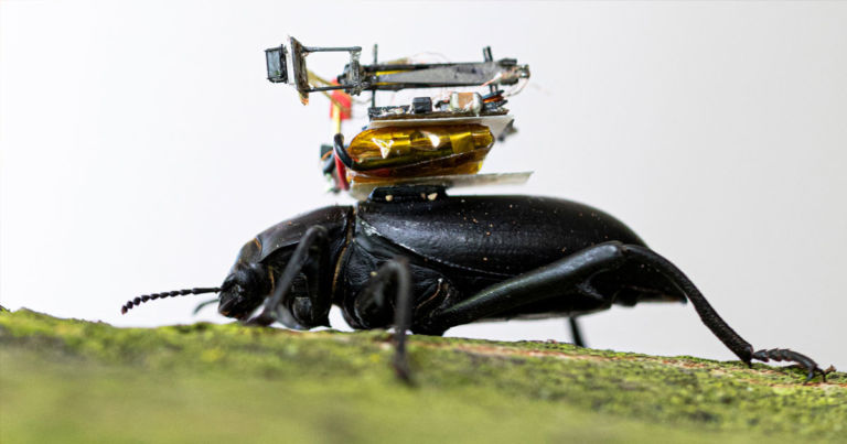 Scientists Build Tiny Camera For Beetles to Carry Around - Futurism