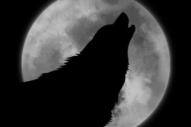 First full 'wolf' moon of 2020 to appear on Friday night - Bournemouth Echo