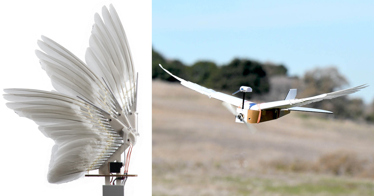 a robot bird built using 40 pigeon feathers flies like the real thing - Designboom