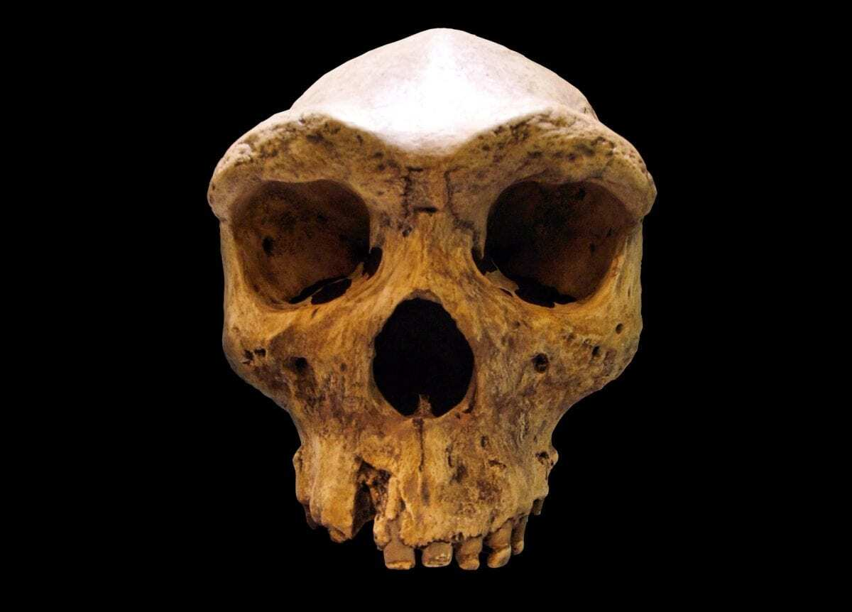 Dating of Broken Hill skull leads to questions over modern human ancestry - HeritageDaily